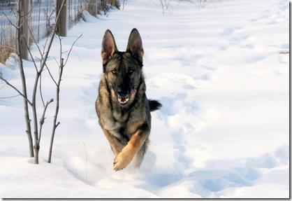 2011.1.28 Brita.Jake snow dogs-10