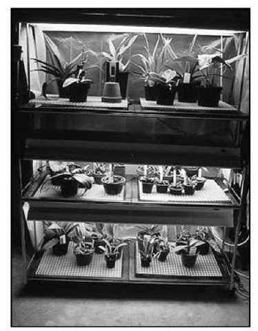Four-tube, rather than two-tube, units are highly recommended for low- to medium-light orchids.