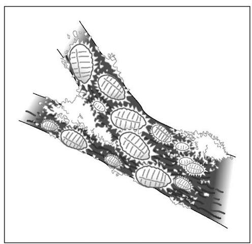 Mealybugs look like white cottony masses.