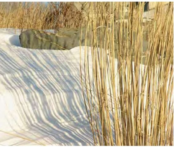 The linear drama of grasses plays through all seasons. Miscanthus shadows are etched on a snowbank in Newport, Rhode Island, in late January.