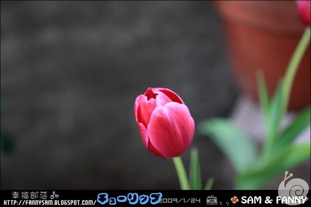 Blog_DPP_0053