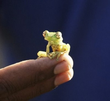 funny_young_frog-769331