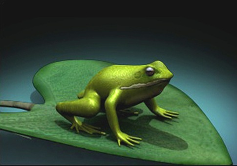 frog on top