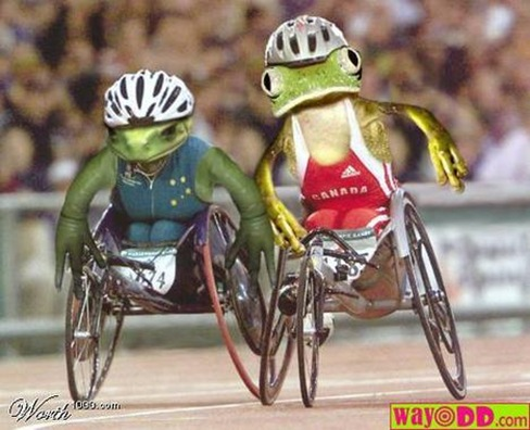 funny-pictures-the-frog-wheelchair-races-lLM