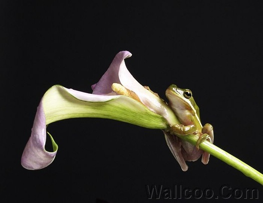 A frog hanging on to a flower