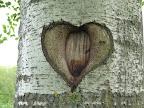 Herz oder Herz