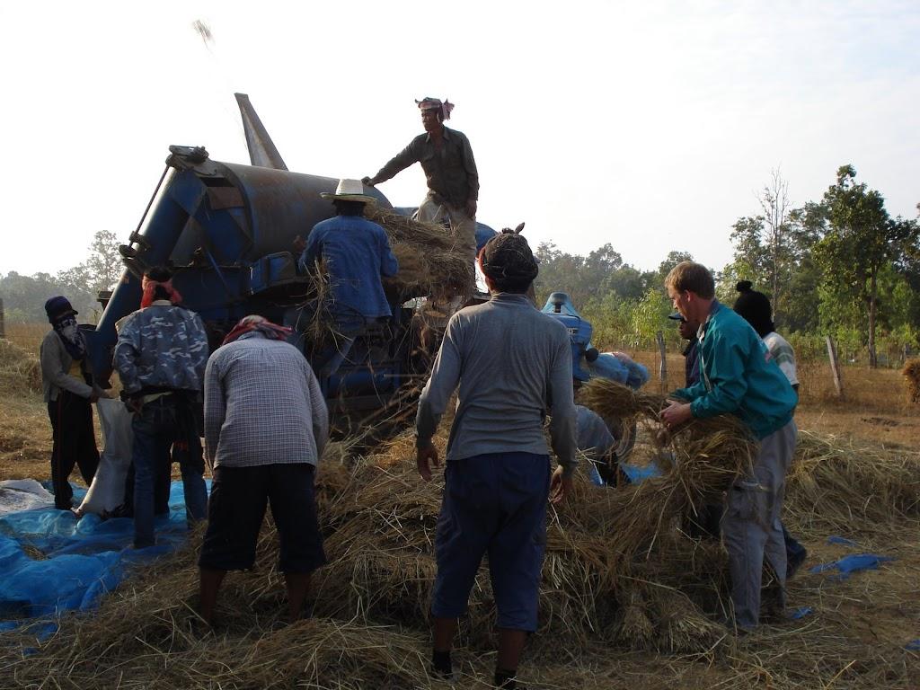 Helpen met de rijst Ban Dung2 05dec07.JPG