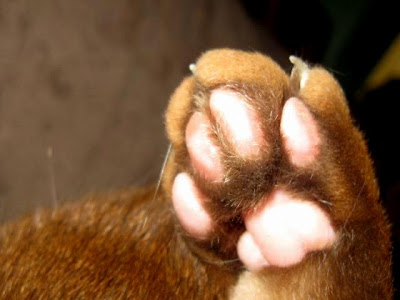 healthy rear paw pads of a cat that has not been declawed
