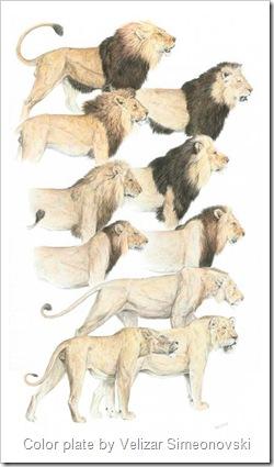 lion mane chart
