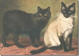 siamese-cat-and-manx-cat-1903