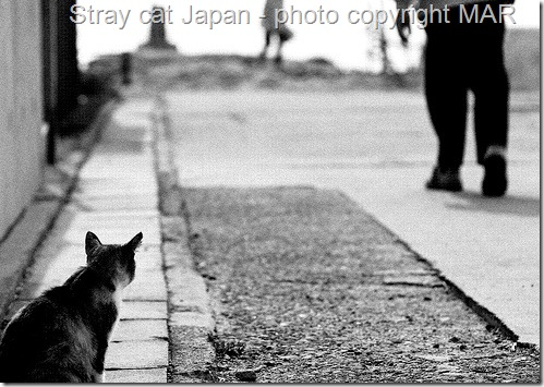 stray cat in Japan