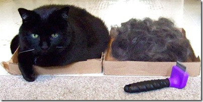 cat and cat fur and furminator tool