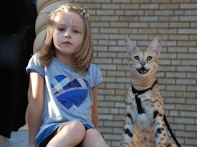Leonie, the daughter of Matrin and Kathrin Stucki and MAGIC an F1 female Savannah cat from A1 Savannahs