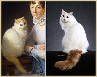 comparison of Turkish Van cat in France in 1700s and Turkish van in 2009