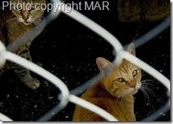 feral cat in Japan