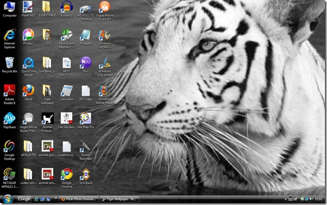 tiger-wallpaper-333