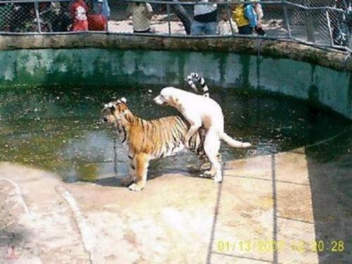 pervert_animals_part_640_26