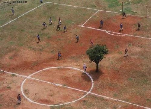 soccer_tree