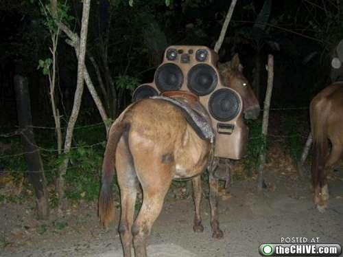 donkey music