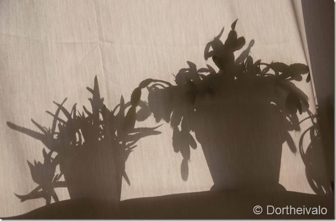 planteskygger