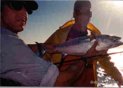 Rob Snowhite w/ false albacore @ Harkers Island, NC