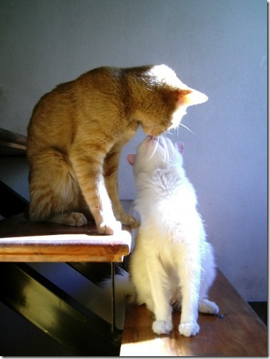 beso de gatos (21)