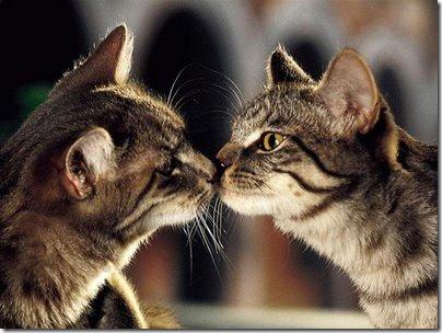 beso de gatos (15)