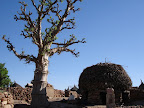 Dogon Country - Djiguibombo toguna and baobab tree