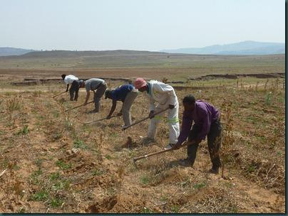 Lesotho 268