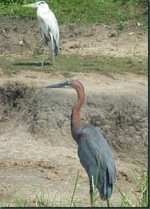 Queen Eliz park and Kampala 078
