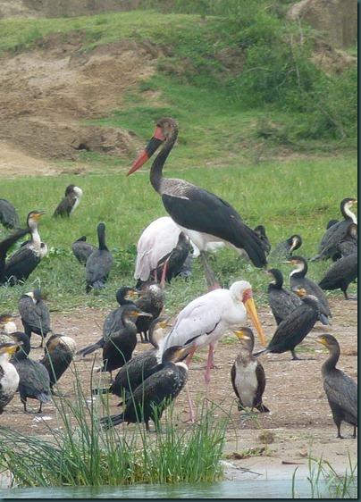 Queen Eliz park and Kampala 144
