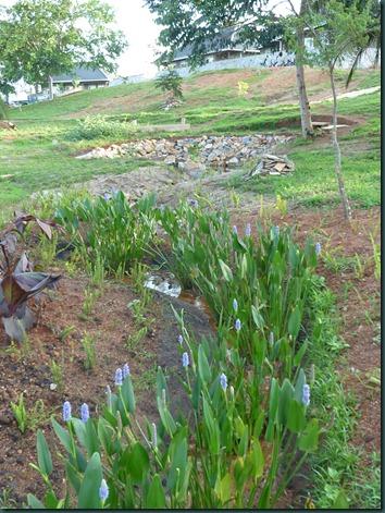 Landscaping Dec. 2010 049