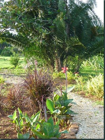 Landscaping Dec. 2010 018