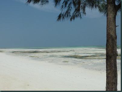 Zanzibar 196