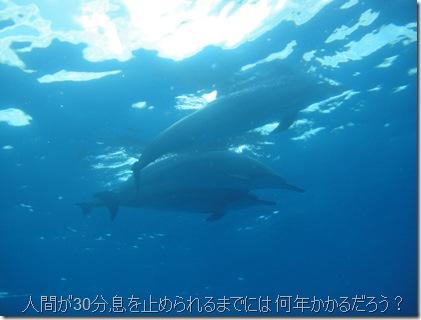 ハワイ島でイルカと泳ぐ