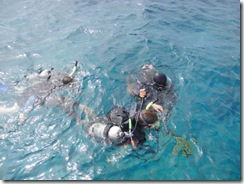 ダイビング・ハワイ島