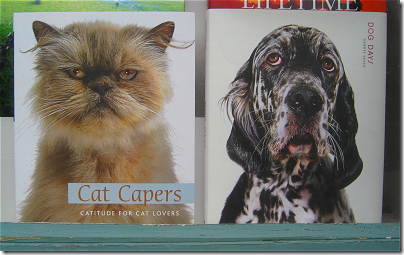 Cat Capers and Dog Days