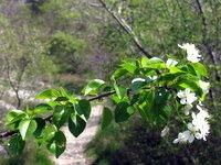Barve pomladi