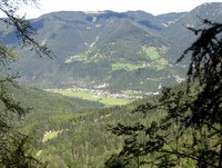 Gozd Martuljek v dolini