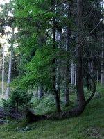 Zanimivo drevo na začetku poti