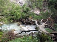 Podrto drevo pred začetkom soteske