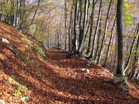 Markirana pot v dolino