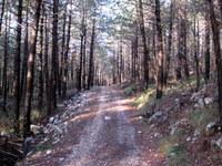 Gozdna cesta proti Skoznu