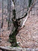 Naravna skulptura v gozdu