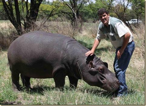 Hipopotamos1