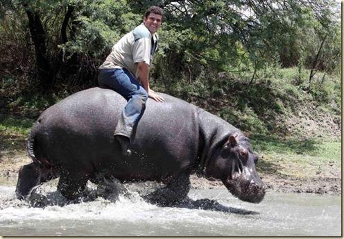 Hipopotamos2