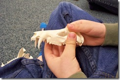 Eastman Nature Center-Bones and Skulls