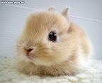 Post para Garotas - Cute bunnies