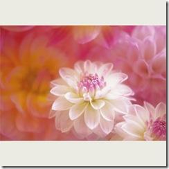 flower0104_m04_thl
