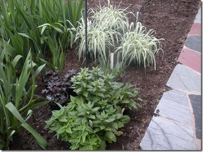 plants 5-1-10 001